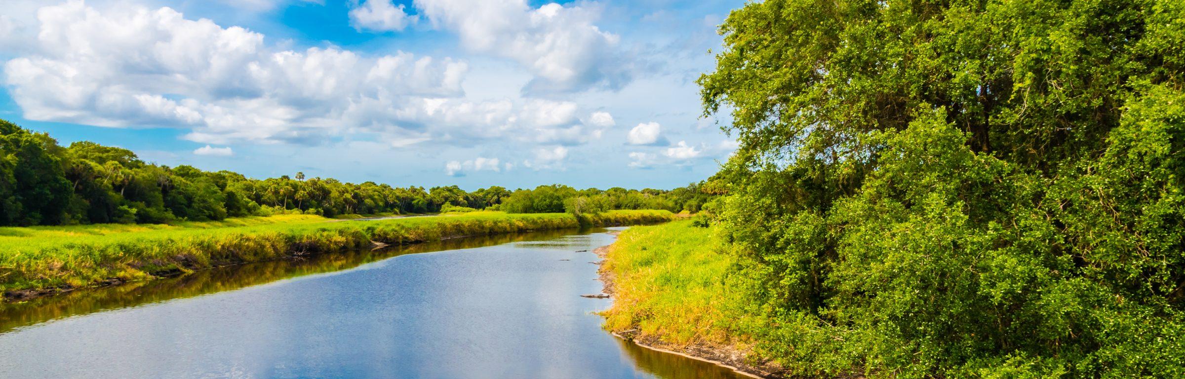 River with alligators at Florida Myakka River State Park. Summer natural landscape, wetland.
