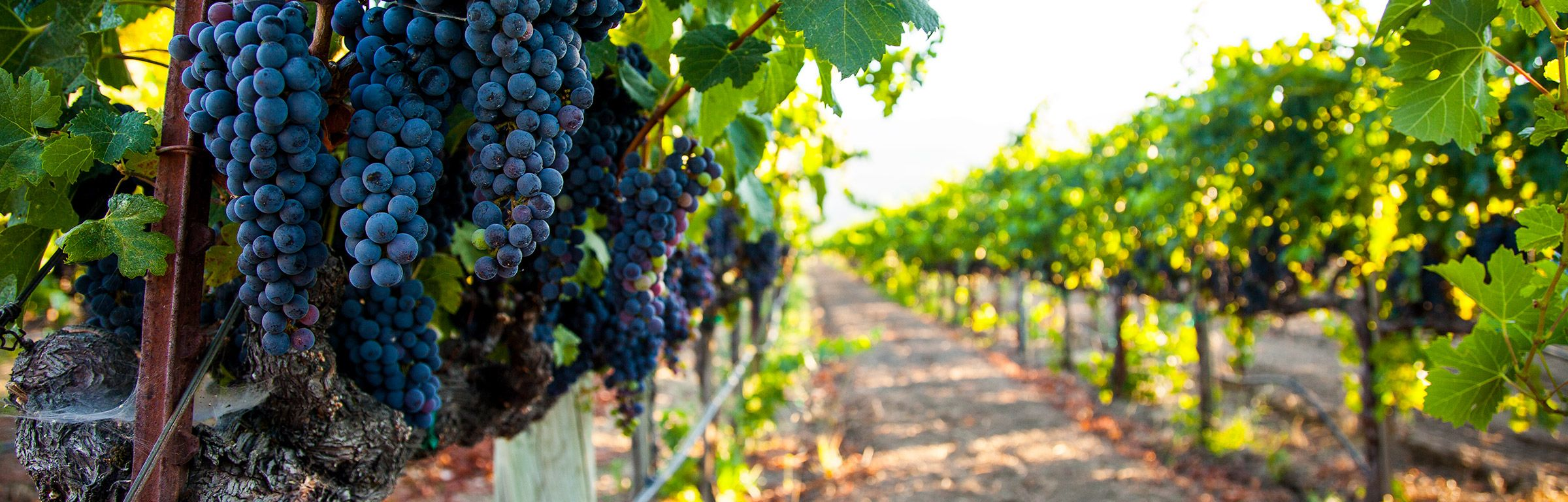 SPCC Plan & Stormwater Pollution Prevention Plan – California Winery & Vineyards